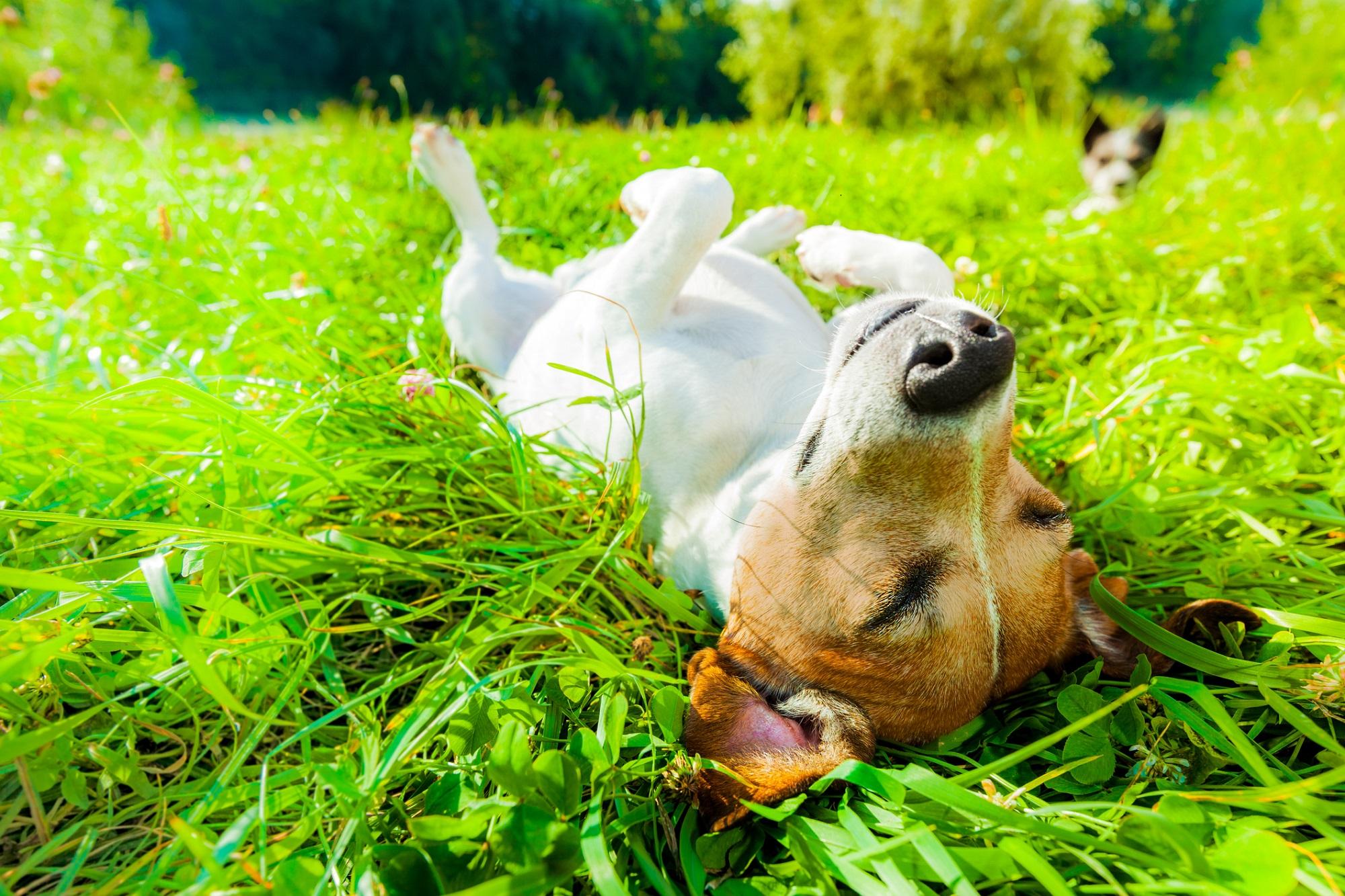 Roliga beteenden hos hundar