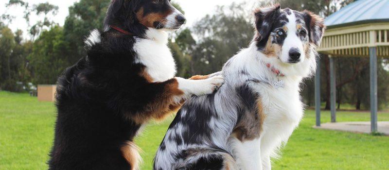 Massage – lika bra för hundar som för människor