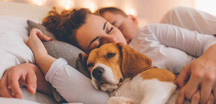 Låta hunden sova i sängen – fördelar och nackdelar