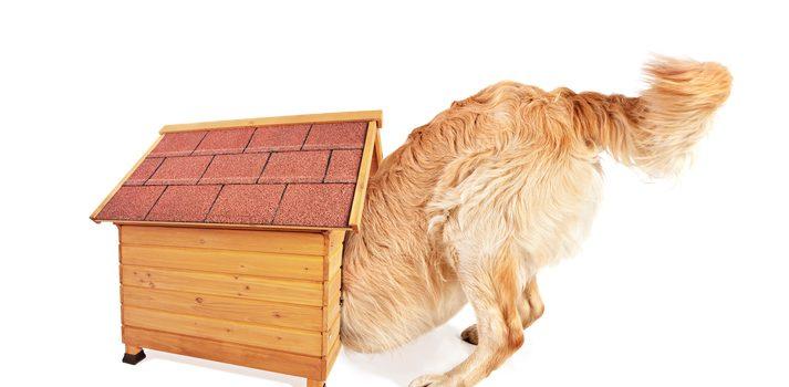 Så bygger du en bra hundkoja